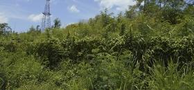 Verdaderas selvas áreas de Pemex