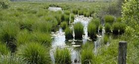 Sagarpa ignora proyectos de conservación