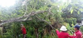 Lluvias derrumban árboles